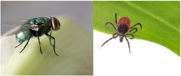 Flea and Flies Control Payneham